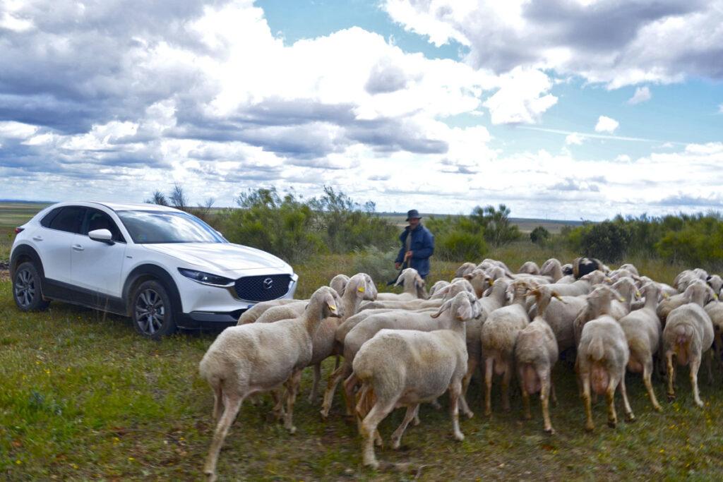 Ruta en Mazda CX30 por Tierras de Pinares