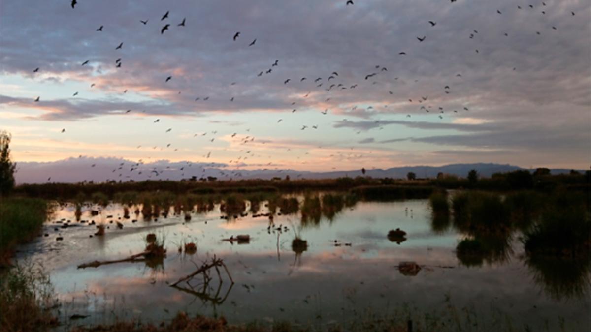 Seat y el Grupo Volkswagen trabajan juntos para recuperar el ecosistema del Parque Natural Delta del Ebro