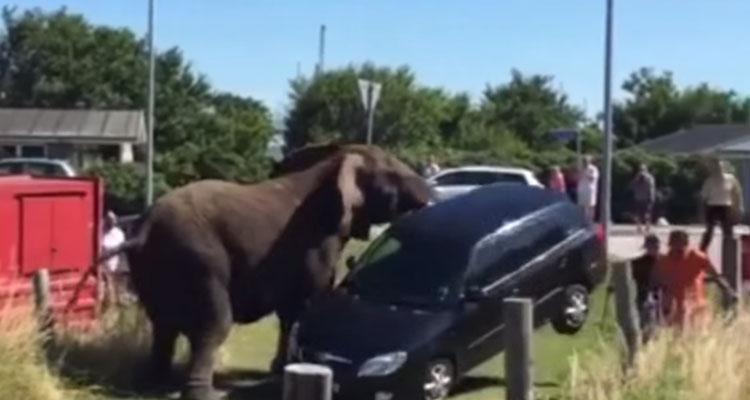 Un elefante paga su enfado con un Skoda Fabia