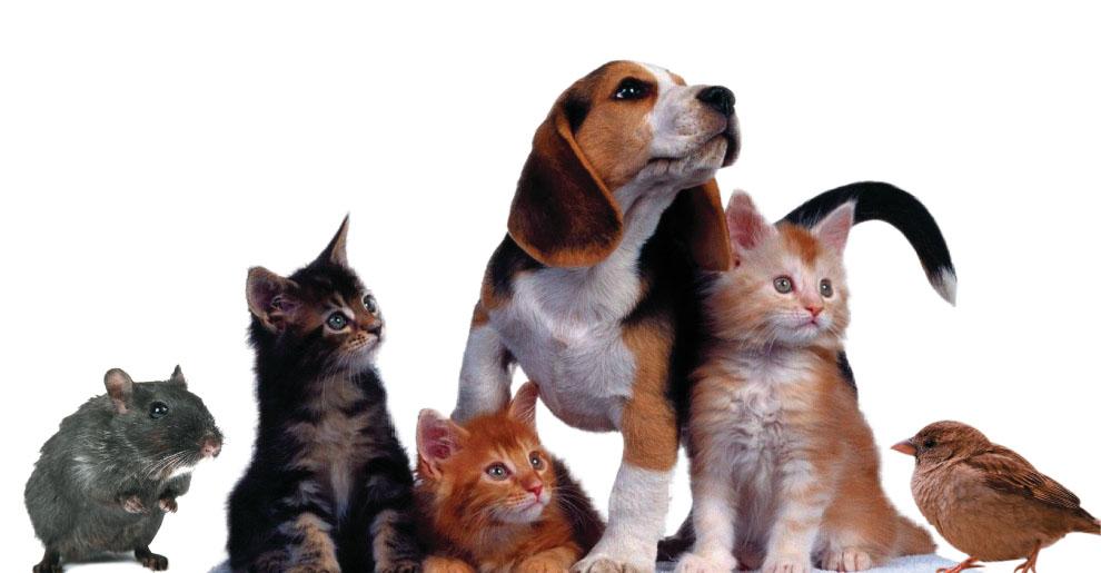 12 productos para proteger tu coche de los animales
