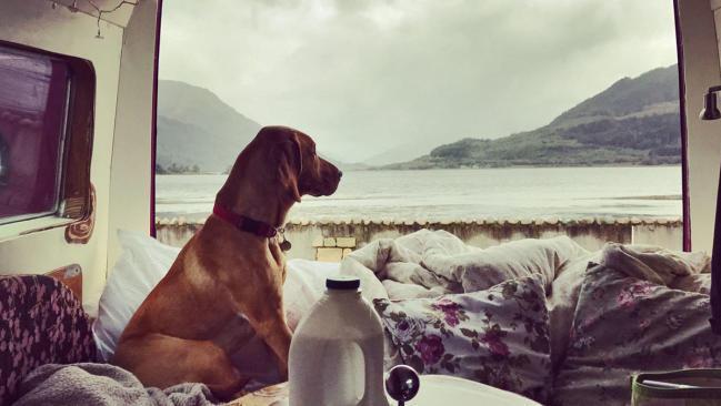 Alquilar furgoneta camper para viajar con mascotas