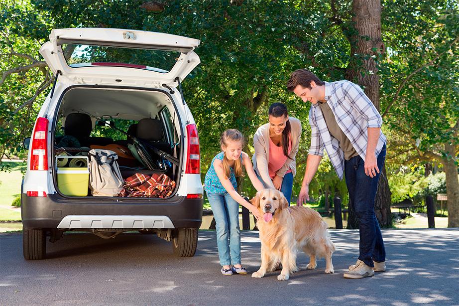 viajar animales compania