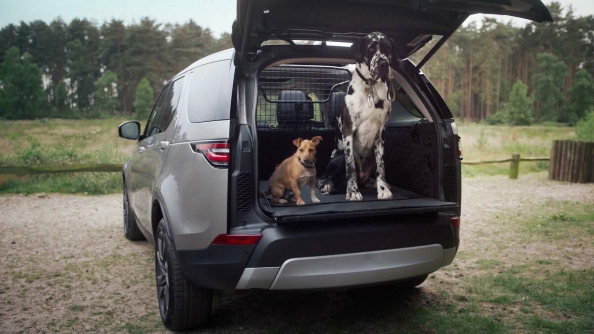 Cómo llevar a los perros correctamente asegurados en el coche