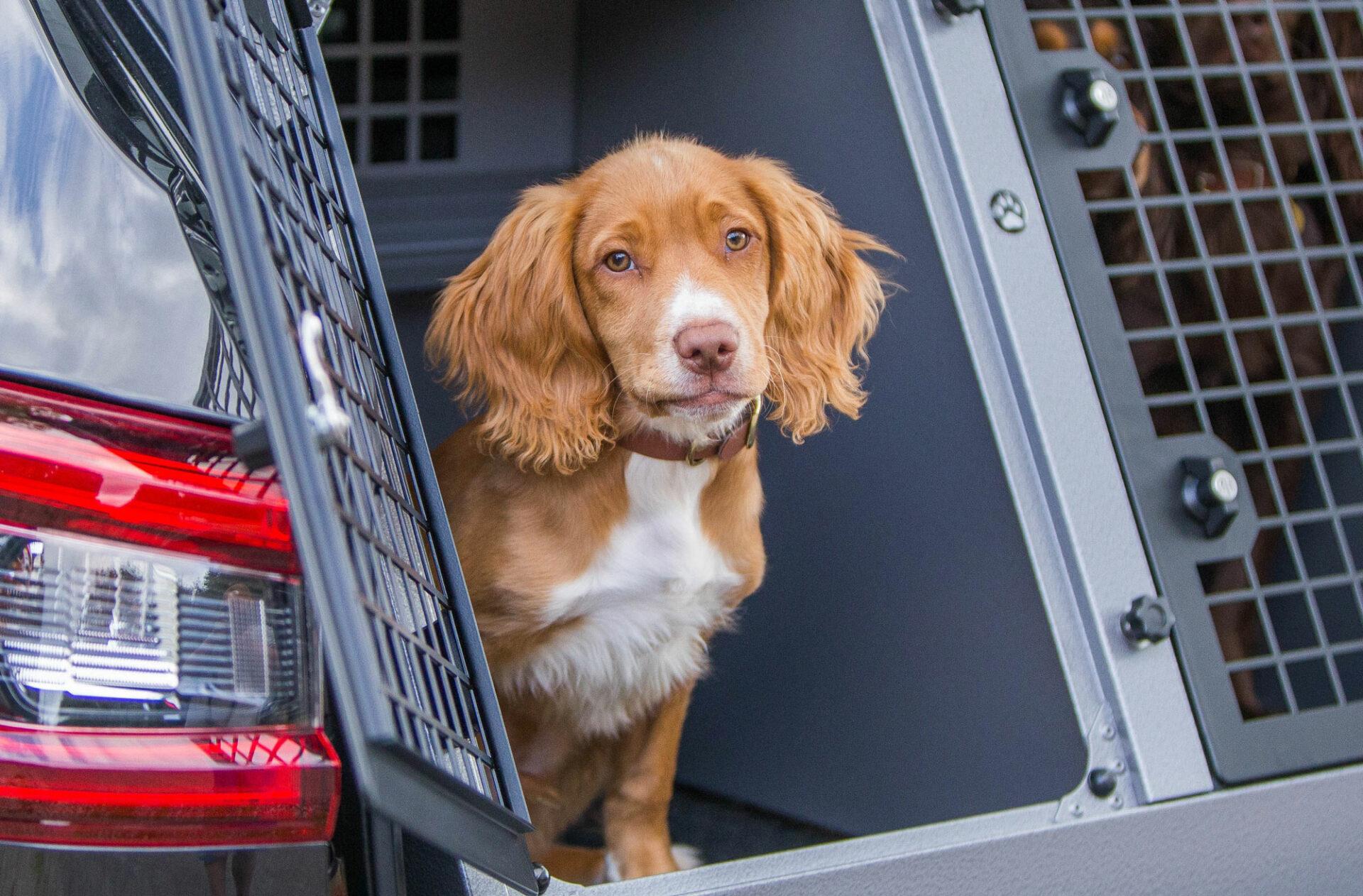 transporte de mascotas en el coche